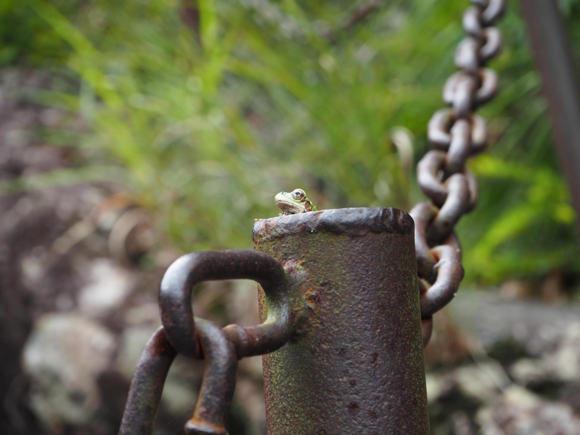 井の中の蛙のススメ