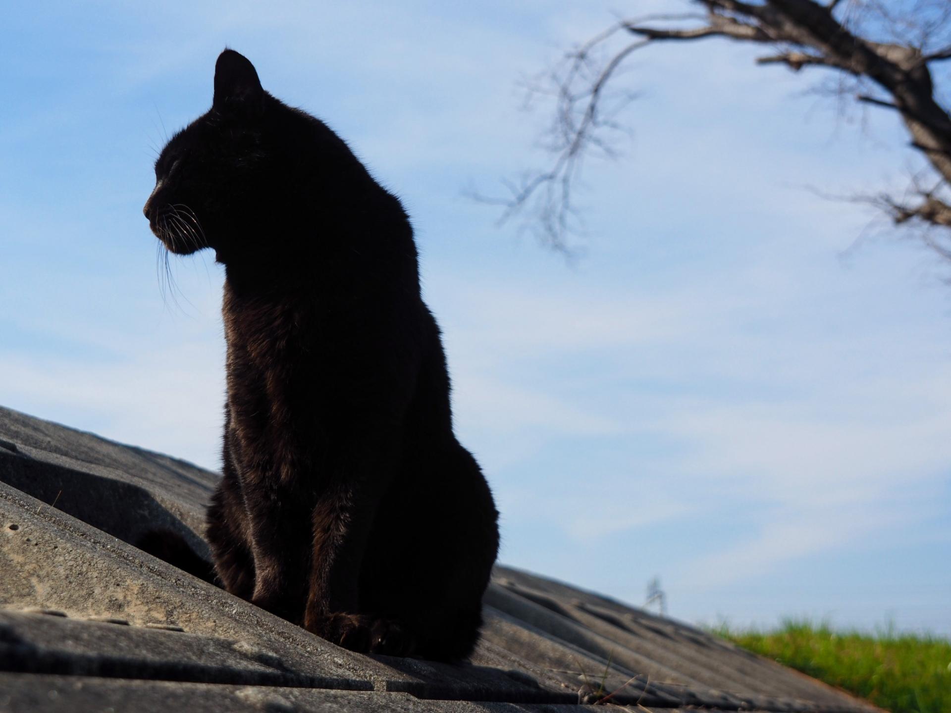 死を予知する猫